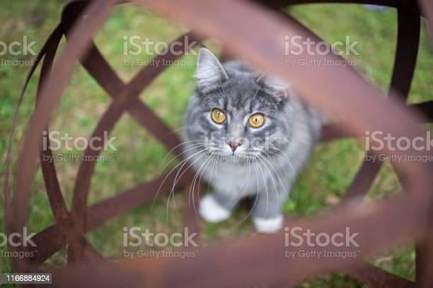 Cat garden orb picture id1166884924?b=1&k=6&m=1166884924&s=612x612&h=qttnx4ysaidbghcuo1g0nqcragpa4tno0iozo2almws=