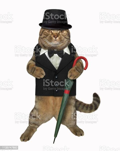 Cat gentleman with a cane umbrella picture id1133747852?b=1&k=6&m=1133747852&s=612x612&h=pbi1q4qlsjq6ua6ud4ksetqr2cpkv9dv9nf2dsx ksy=