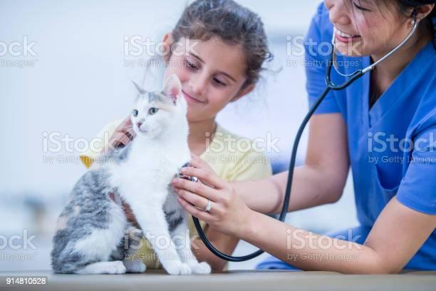 Cat getting a checkup picture id914810528?b=1&k=6&m=914810528&s=612x612&h=8bqrbv302h lg365pim63ary l0runfbf0ls icmyum=