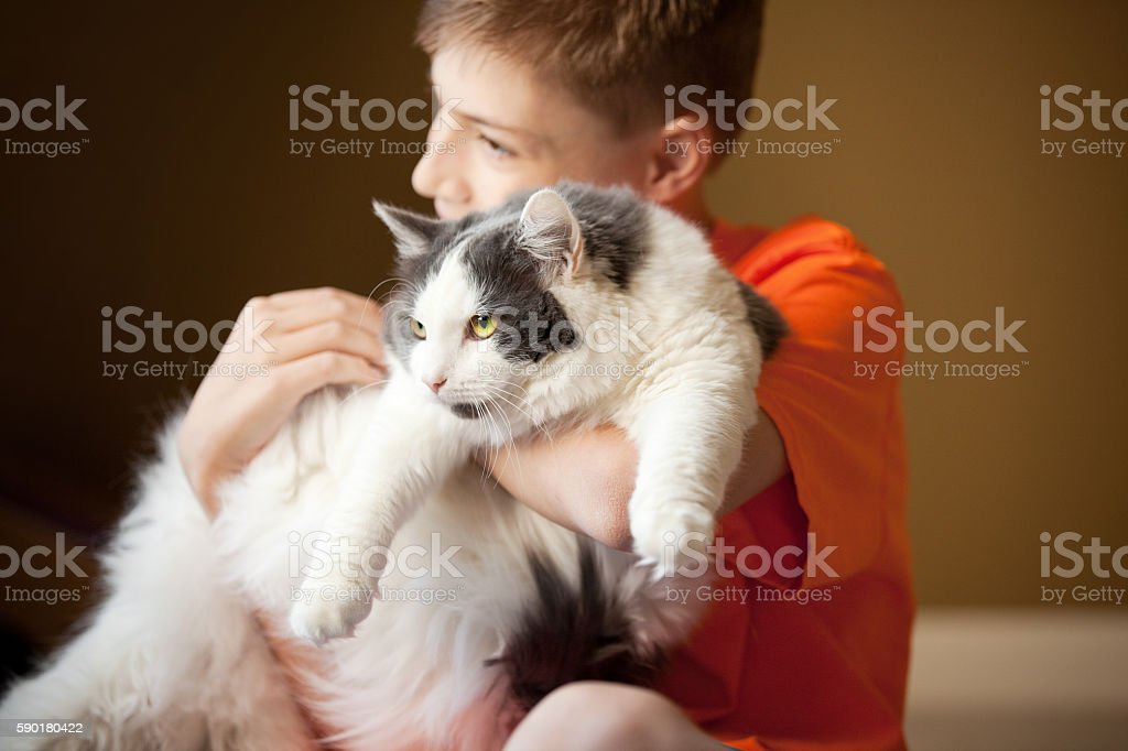 Cat Getting Hugs From Her Boy stock photo