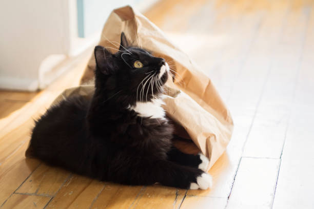 Cat getting out of paper bag. stock photo