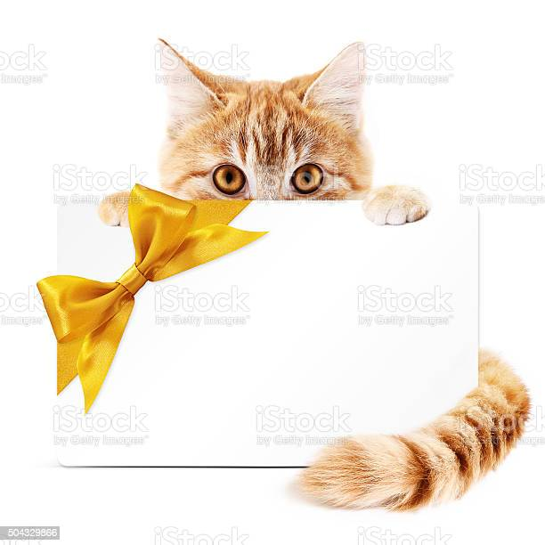 Cat gift card with golden ribbon bow isolated on white picture id504329866?b=1&k=6&m=504329866&s=612x612&h=izoncujyyjeegeag9hyirqtekn4zdo5we7rzebzve1w=