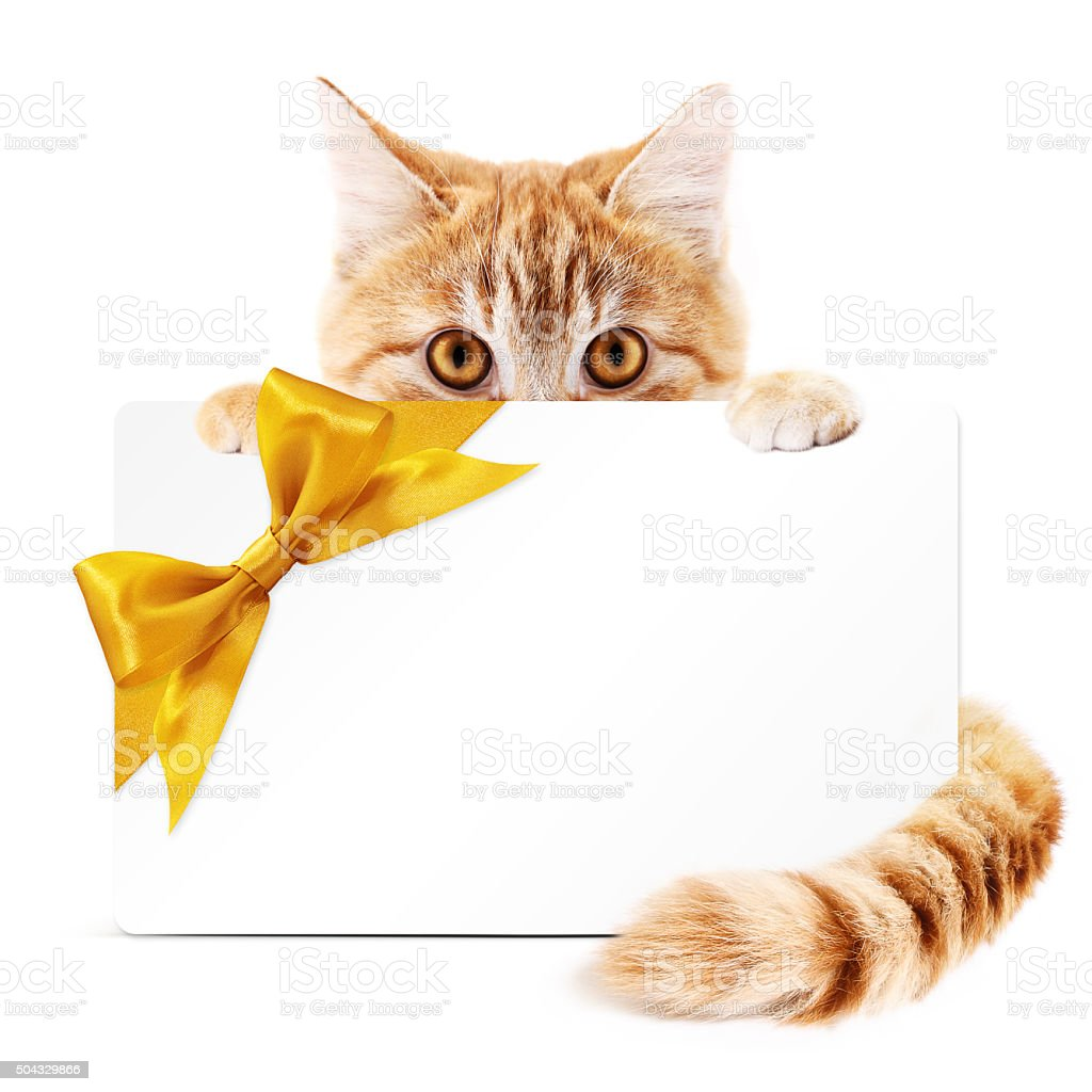 cat gift card with golden ribbon bow Isolated on white stock photo