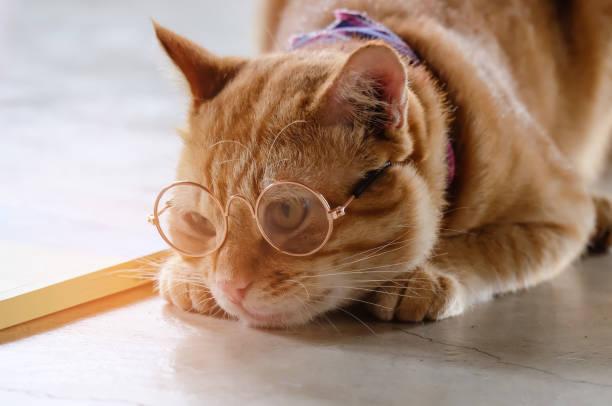katze-gläser - katze zeichnen stock-fotos und bilder