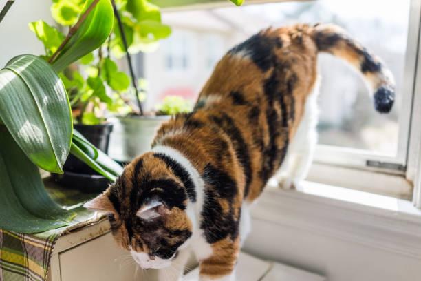 Cat going jumping down from windowsill by plants picture id646240028?b=1&k=6&m=646240028&s=612x612&w=0&h=7u03zypa8kmdszwpz0lqoppkgskhvriwbcam edqn90=