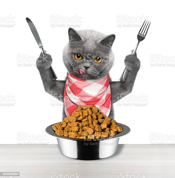 Cat going to eat and hold knife and fork picture id540090804?b=1&k=6&m=540090804&s=612x612&h=tl82fwn gx q uu6mszdz3jjozu6zk8ulhgov0wqezu=
