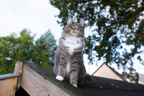 Cat gps tracker picture id1179607625?b=1&k=6&m=1179607625&s=612x612&w=0&h=xldjr4x xpl0a2m3doodzljczxi4mpx8pa0muepv1vq=
