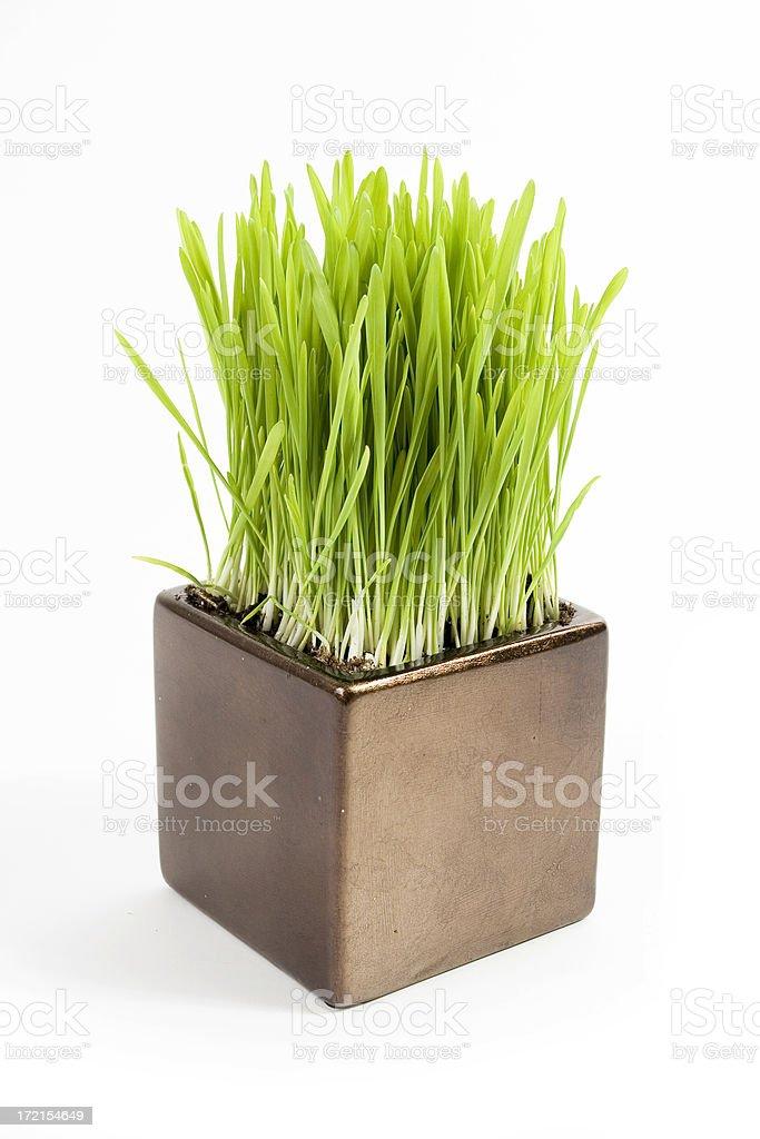 Cat grass royalty-free stock photo