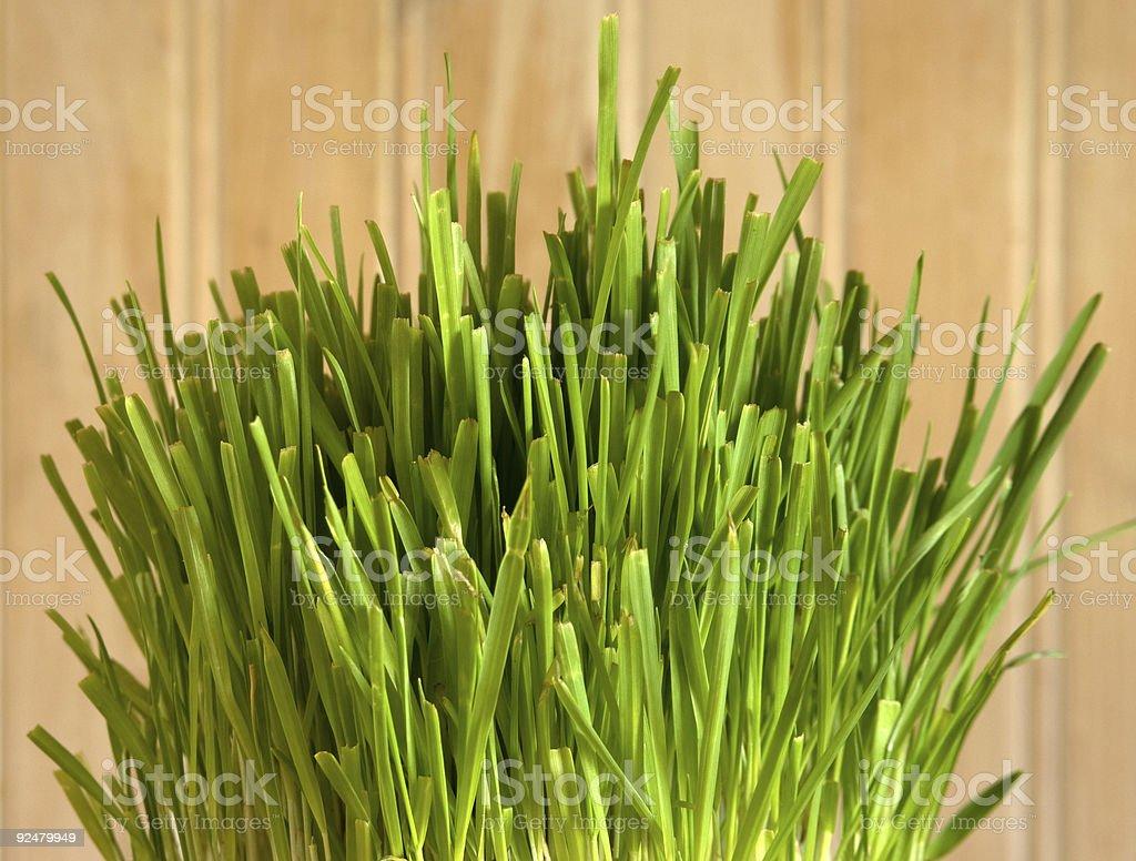 Katze Gras mit Holz-Hintergrund Lizenzfreies stock-foto