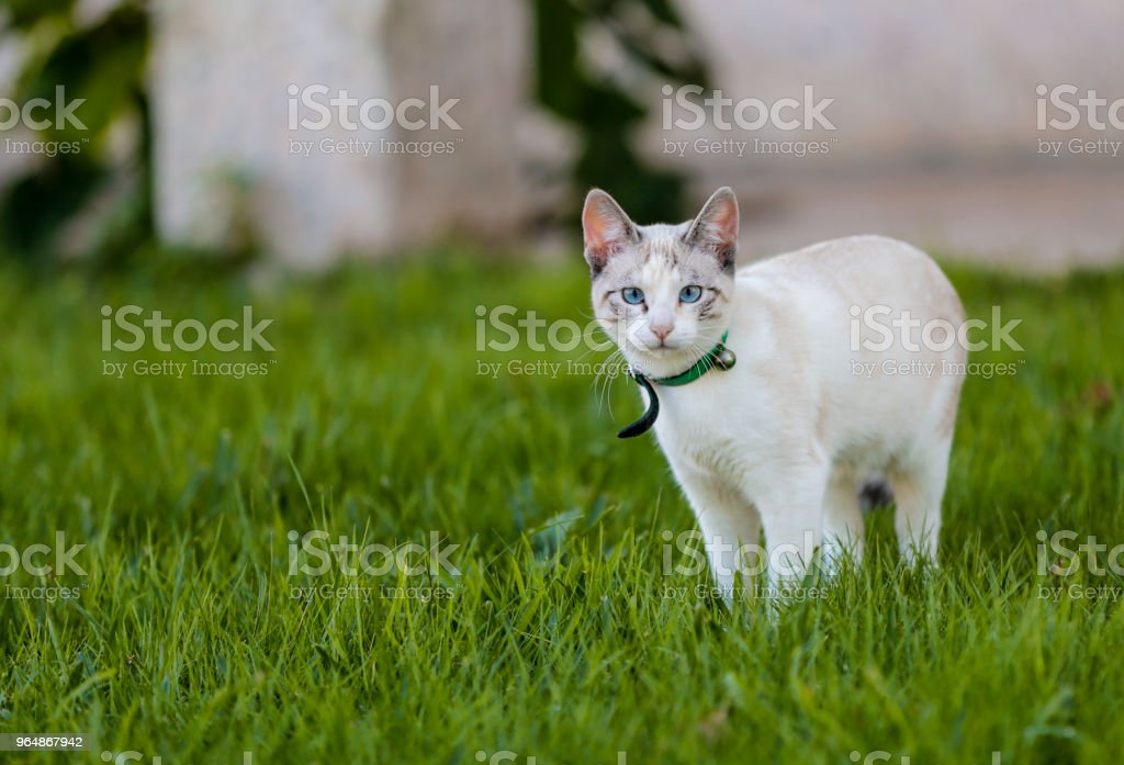 Cat green garden house . royalty-free stock photo