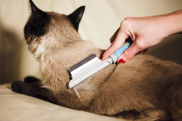 Cat grooming picture id946637330?b=1&k=6&m=946637330&s=612x612&w=0&h=ekzouo4kinva1u2vd3cbgggtlsmhibg qi e4irvkms=