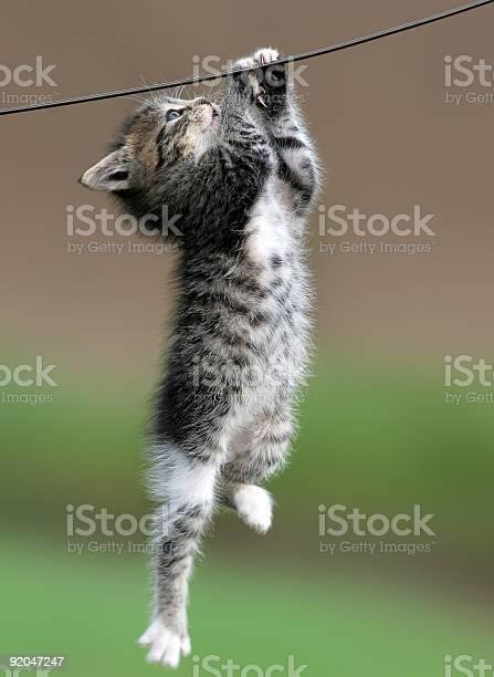Cat hanging on a wire picture id92047247?b=1&k=6&m=92047247&s=612x612&h=iskuzua0q640q5gcsvr3duyhhuxtaxtbaydd35hc n0=