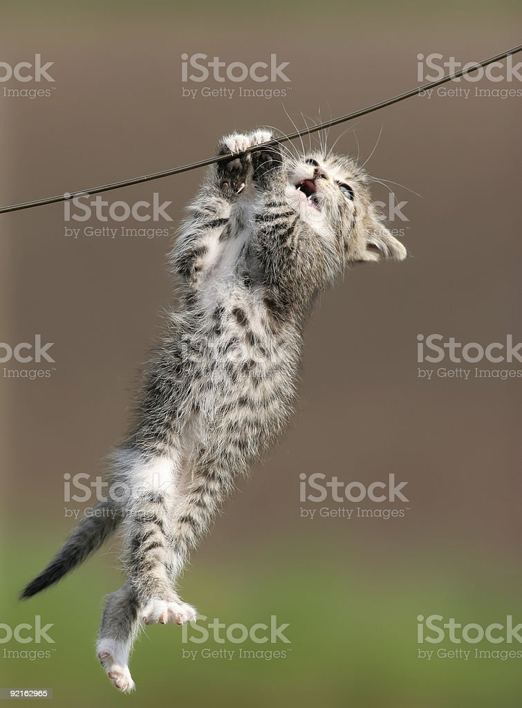 cat hanging on a wire stock photo