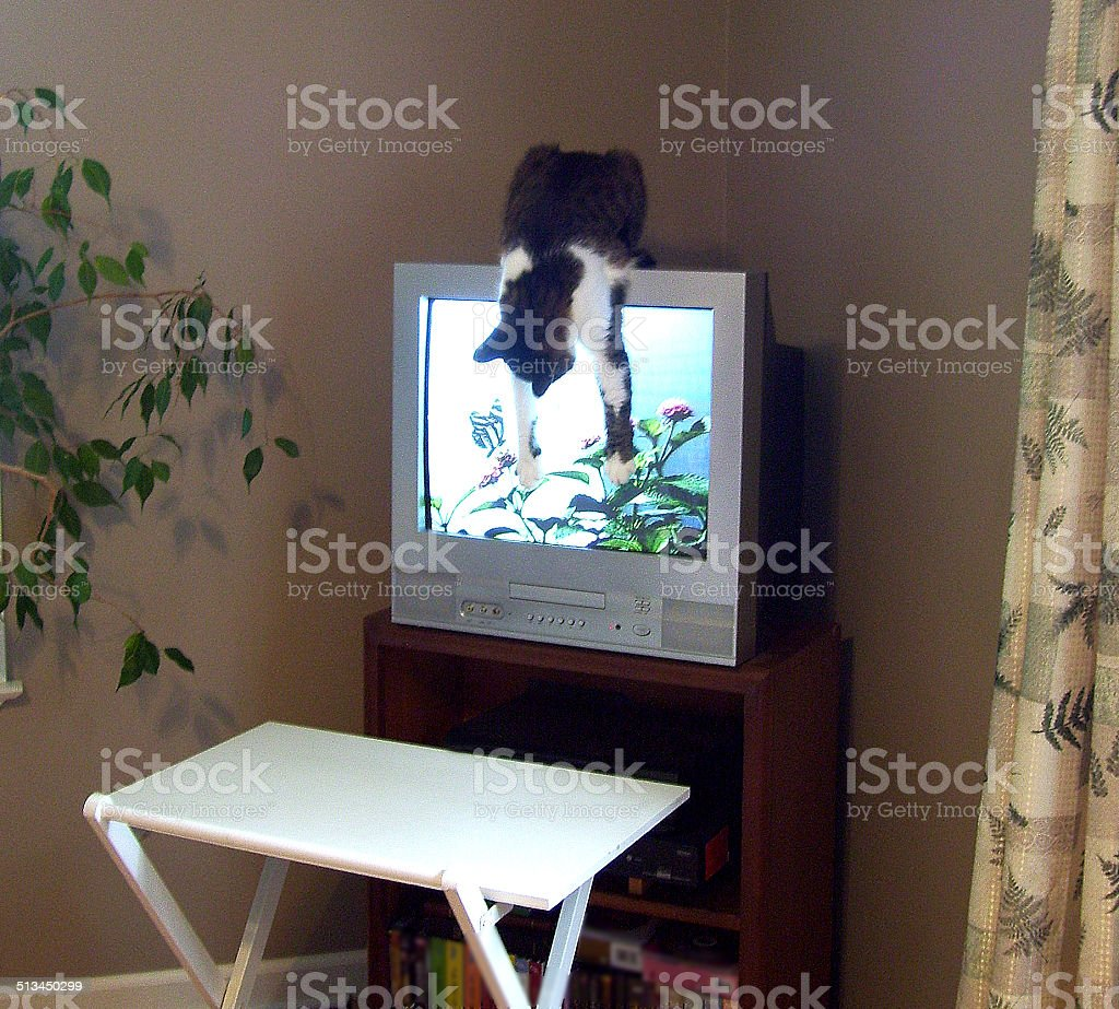 Cat Hanging Upside Down, Watching Images on a TV Screen stock photo