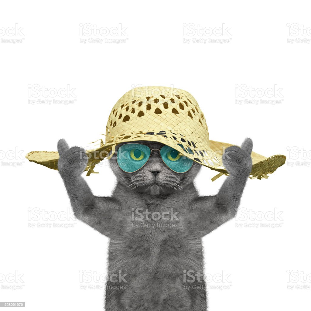 cat have a rest in summer holiday stock photo