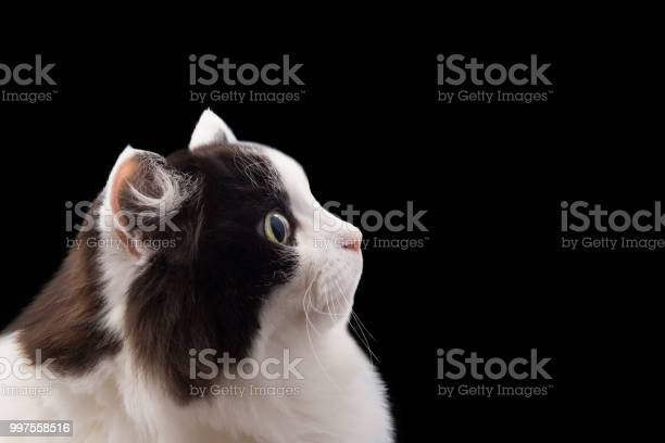Cat head picture id997558516?b=1&k=6&m=997558516&s=612x612&h=y e5ujc1ccjoezzecegvds6fmo2hg92hunxcbrtvhjk=