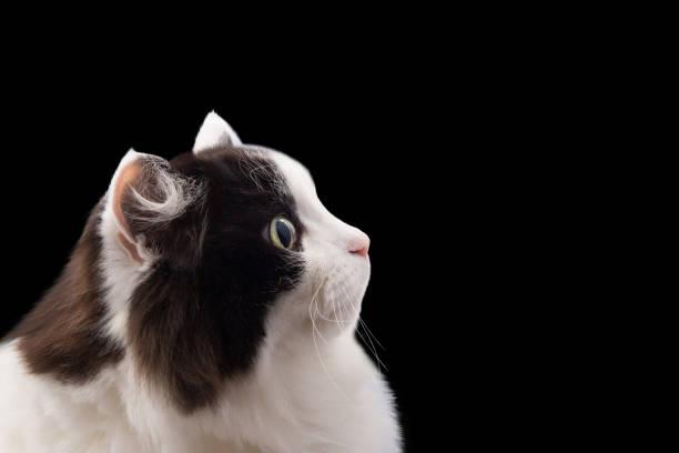 Cat head picture id997558516?b=1&k=6&m=997558516&s=612x612&w=0&h=qsrlzassbnvuvm31zl21iszbolskudrf9hj1sj 5a i=