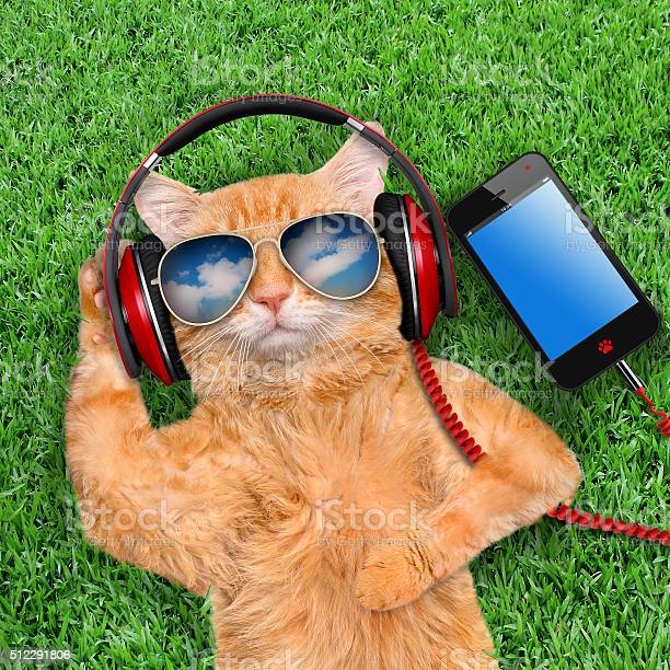 Cat headphones wearing sunglasses relaxing in the grass picture id512291806?b=1&k=6&m=512291806&s=612x612&h=2sqbtkugrhh5iv54zg7vh3rkgronqwldzbsevlpgj 0=