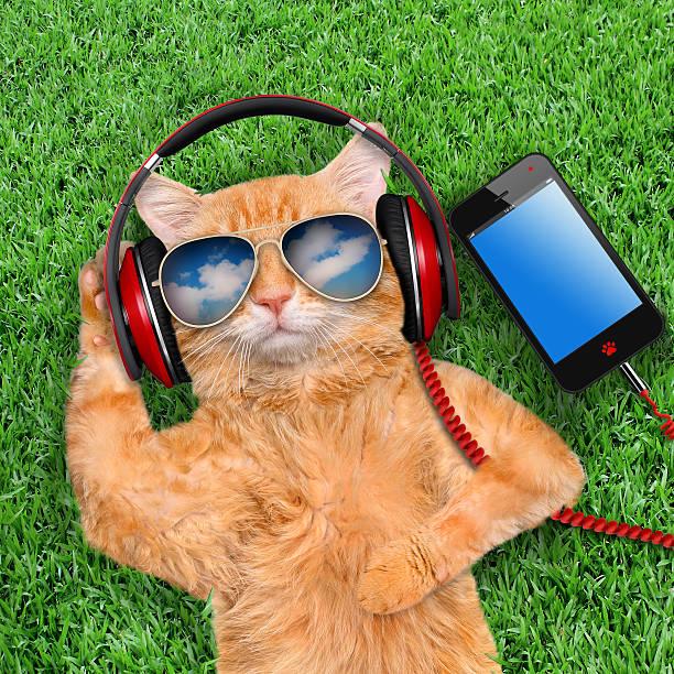 Cat headphones wearing sunglasses relaxing in the grass picture id512291806?b=1&k=6&m=512291806&s=612x612&w=0&h=vevxnlmmzjrrjff4mpchtyryo2wvflld4qpd8gmsplq=