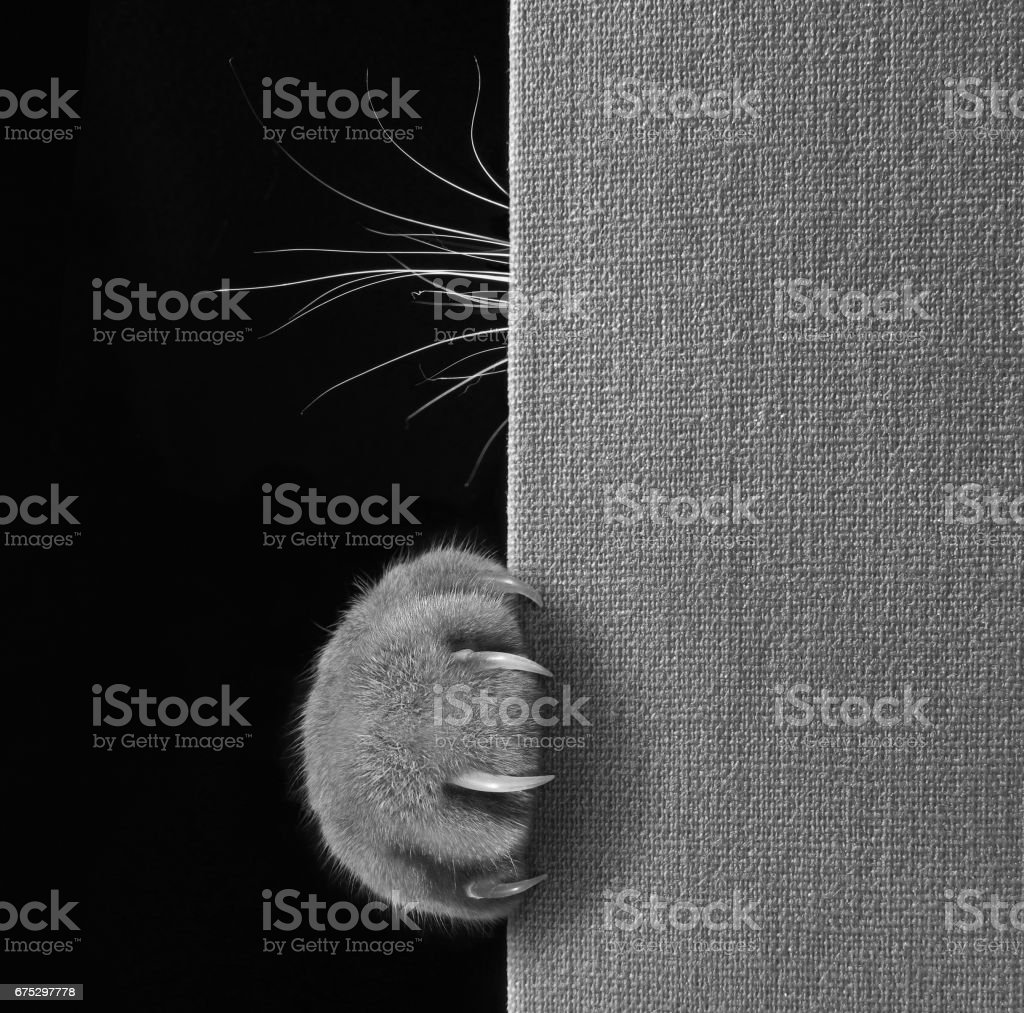 Cat hid behind a book stock photo