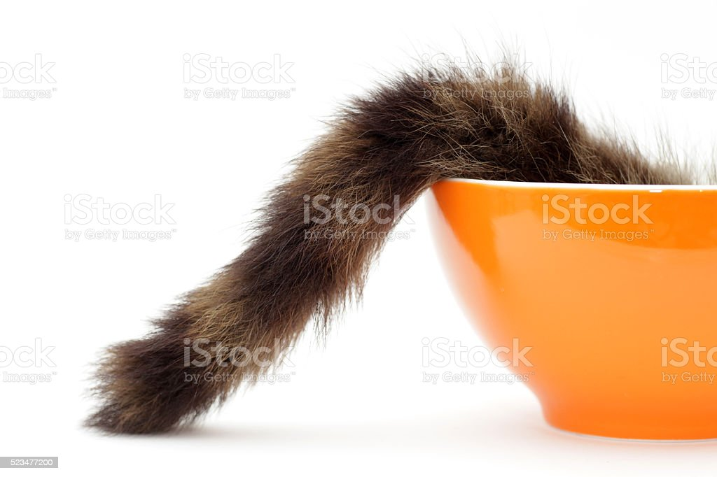 Cat hidden in bowl stock photo