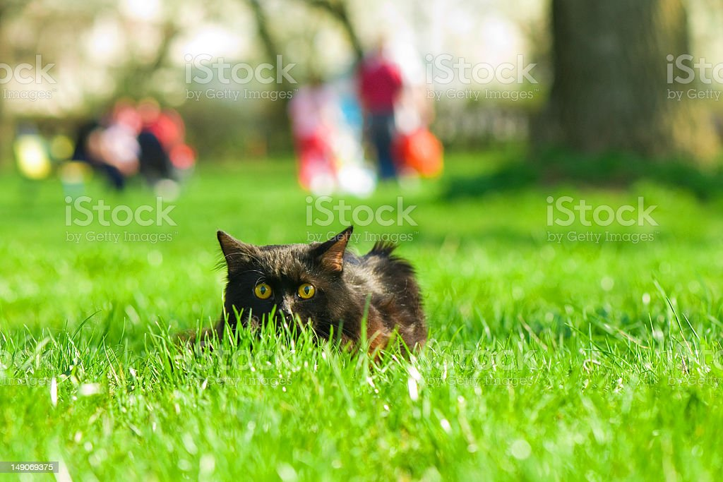 cat hidding in grass royalty-free stock photo