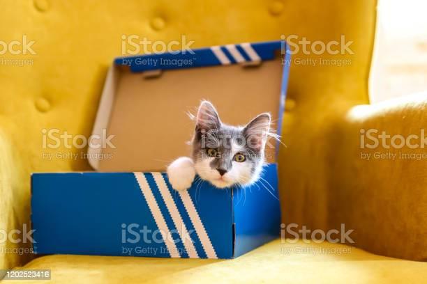Cat hiding in a shoe box picture id1202523416?b=1&k=6&m=1202523416&s=612x612&h=hn6s7lfp8kwisloc35liyyk8r2aj5 4 sdkgx4opq8w=