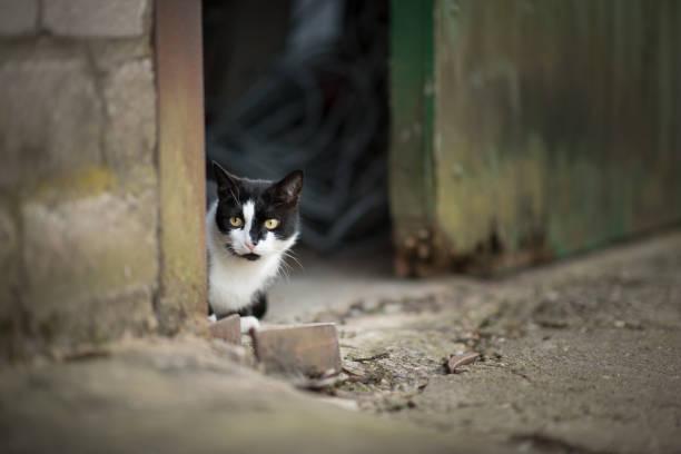 cat hiding in barn stock photo