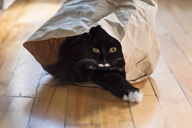 Cat hiding in paper bag. stock photo