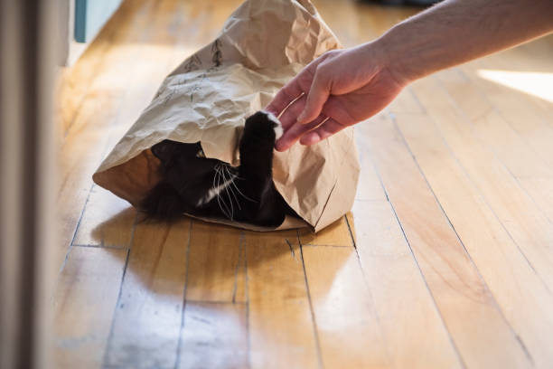 Cat hiding in paper bag playing with owner's hand. stock photo