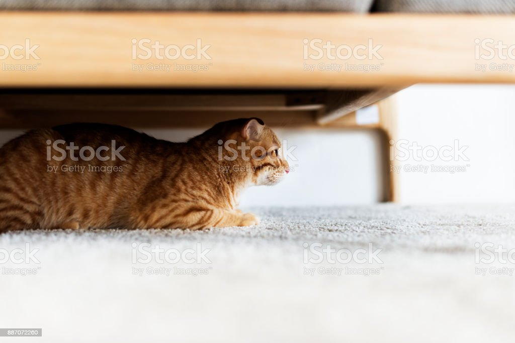 A cat hiding under the couch stock photo