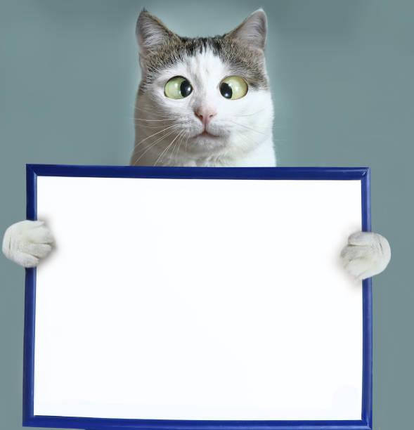 katze halten leer leer papierbogen im rahmen - katzenschrank stock-fotos und bilder