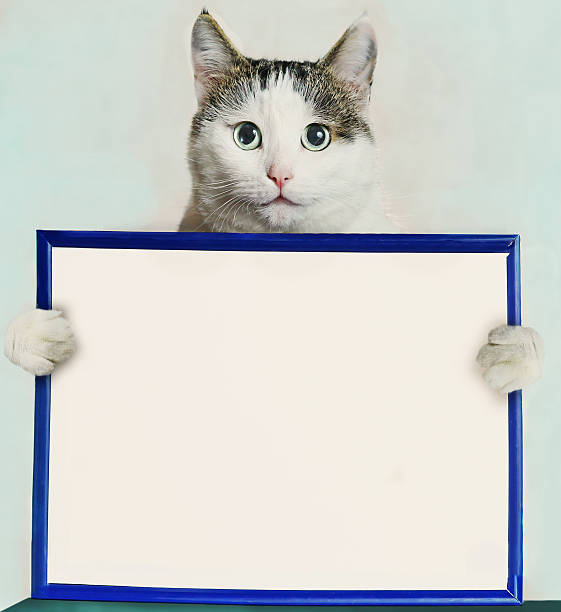 Cat hold blue frame with blank empty white paper picture id612722464?b=1&k=6&m=612722464&s=612x612&w=0&h=fjyp jiuex h1vsjnwmtter7paja6bqocqt svjel9y=