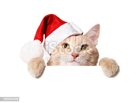 Pretty cat in a Santa hat peeking out of a blank sign, isolated on white. You can add extra white space with your message to the bottom.