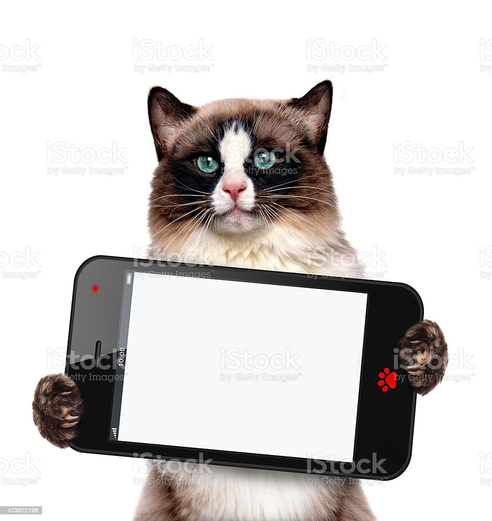 Cat holding a blank smartphone. stock photo