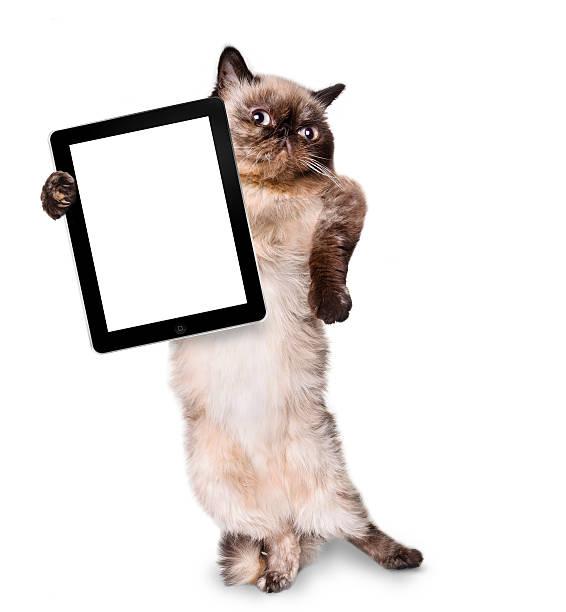 Cat holding a blank tablet picture id499031771?b=1&k=6&m=499031771&s=612x612&w=0&h=xw0rgsnsekjuh8rmy szn2q8j34nmvfbnqqm54hufag=