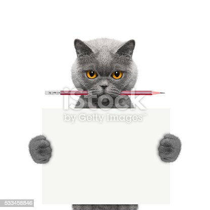 istock cat holding a pencil and blank 533458846
