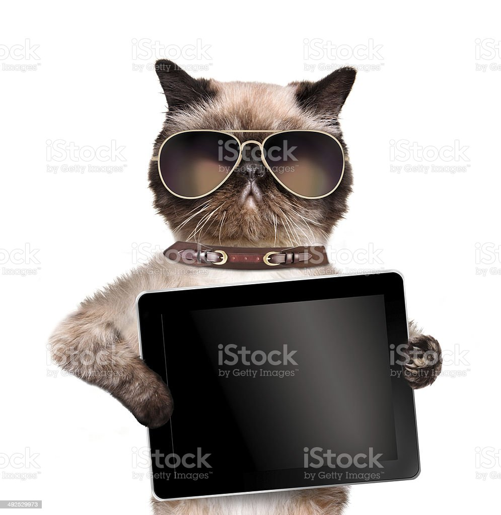 Cat holding a tablet. stock photo
