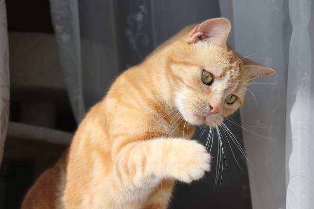 Cat holding his hand out and tilting his head picture id1218297267?b=1&k=6&m=1218297267&s=612x612&w=0&h=xpfp4mjdfutsvinhsccisveq834fjuftj6vei5te8di=