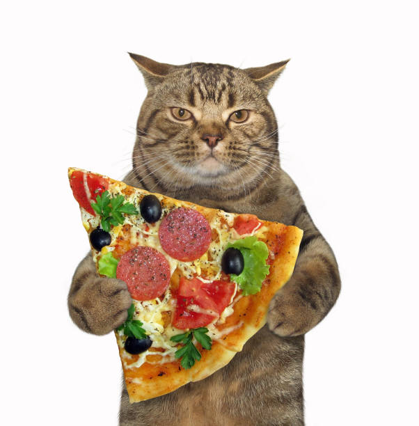 Cat holds a piece of pizza stock photo