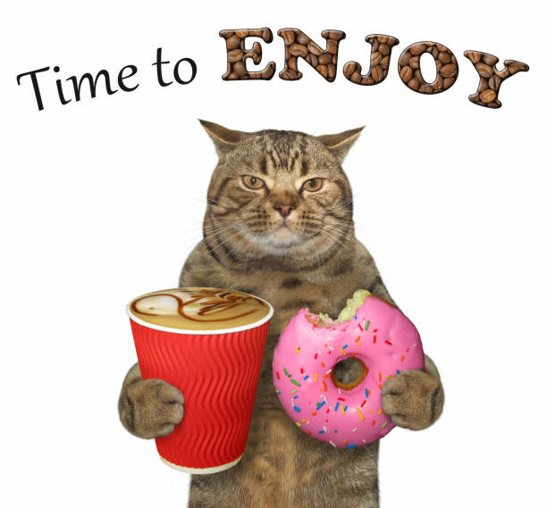 Cat holds a pink doughnut and coffee stock photo