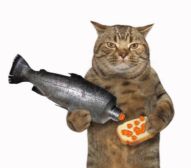 Cat holds a sandwich with red caviar stock photo