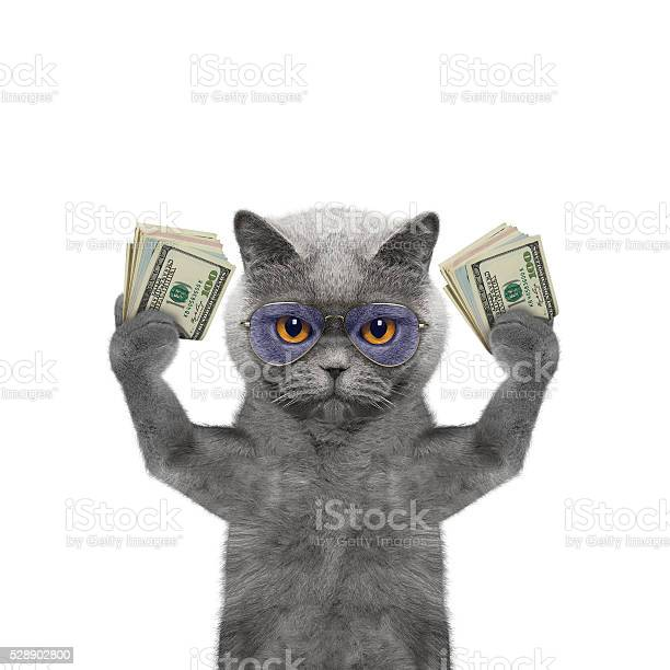 Cat holds in its paws a lot of money picture id528902800?b=1&k=6&m=528902800&s=612x612&h=l52fhblxxfny6cone5los13lfzj0sjzybzsljgjbaoe=