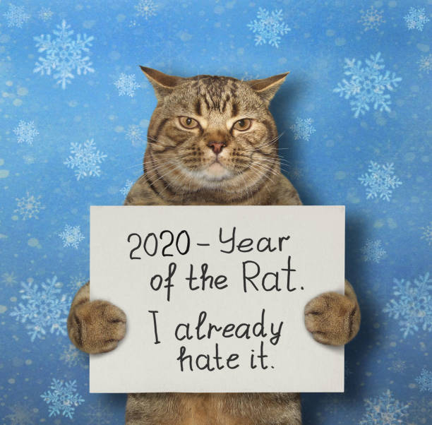 cat holds sign with funny text - chinese new year stock pictures, royalty-free photos & images