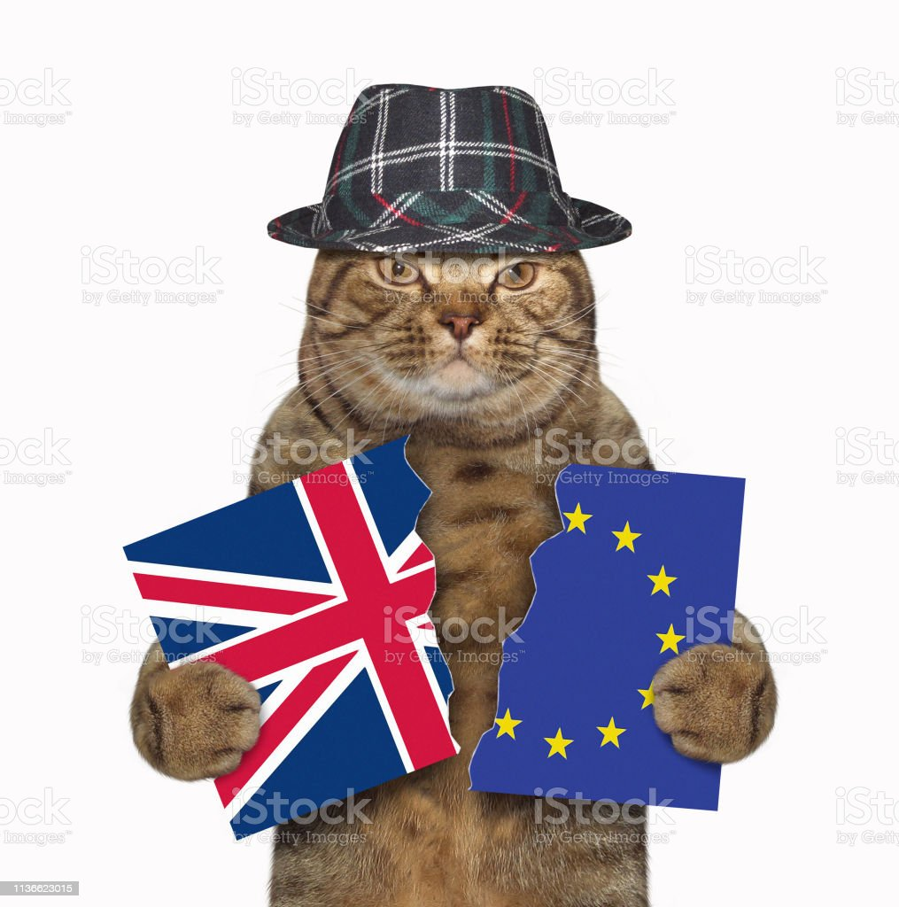 Cat holds two pieces of a flag stock photo
