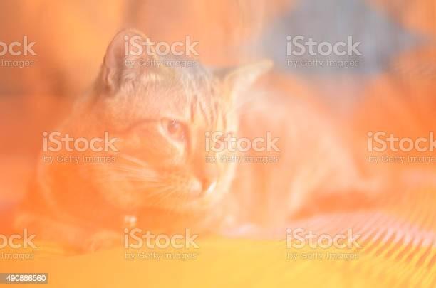 Cat home 7 picture id490886560?b=1&k=6&m=490886560&s=612x612&h=wgbdcvymnyvr1jqi0le1qirhg4bdcr7lhpudko8jics=
