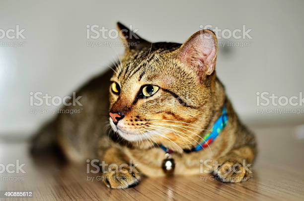 Cat home picture id490885612?b=1&k=6&m=490885612&s=612x612&h=85twtewgcsvzk uoizpb1hufxef3zsjyjtiz8uxq5fc=