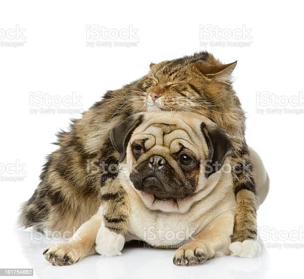 Cat hugs a dog picture id161754682?b=1&k=6&m=161754682&s=612x612&h=uapddik4wrcsuwn9r nbubq96gfql5 5emdjlqidpx4=