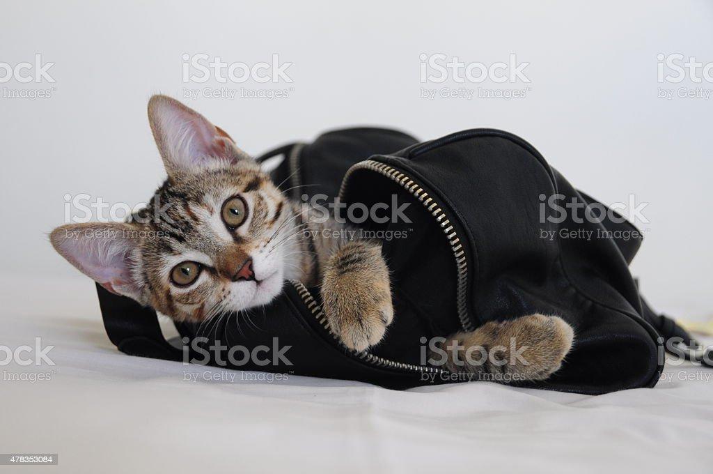 Cat in a bag stock photo