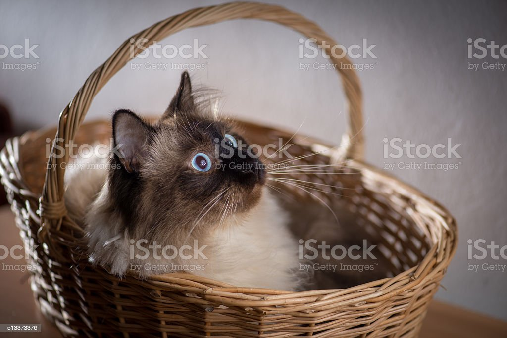 Cat in a Basket stock photo